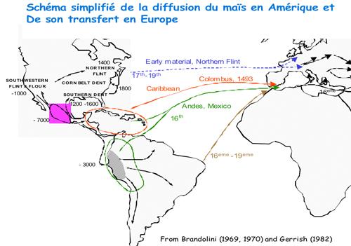 Schéma de la diffusion du maïs en Amérique et de son transfert en Europe