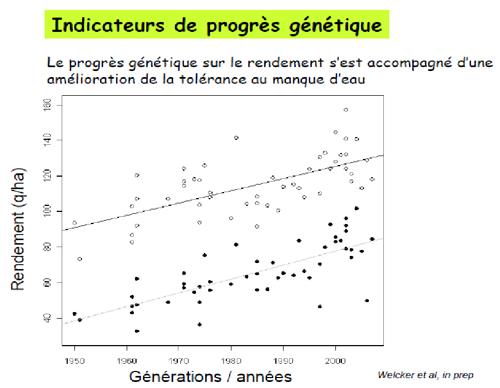 Graphique montrant l'évolution de la tolérance à la sécheresse du maïs
