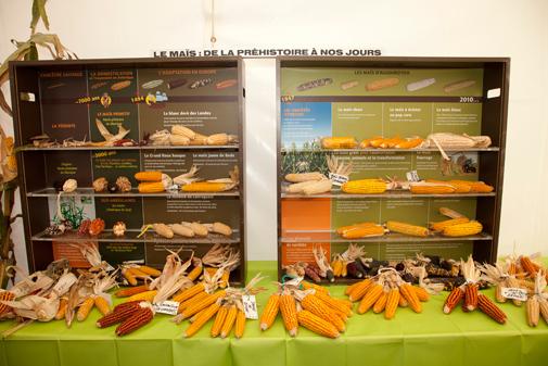 Collection pédagogique sur l'évolution du maïs